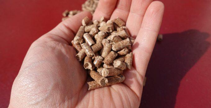 Des pellets de bois de hêtre dans une main